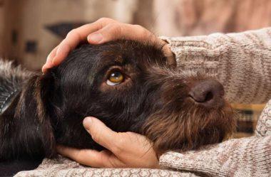 PULGAS em Cachorros | Como ELIMINAR