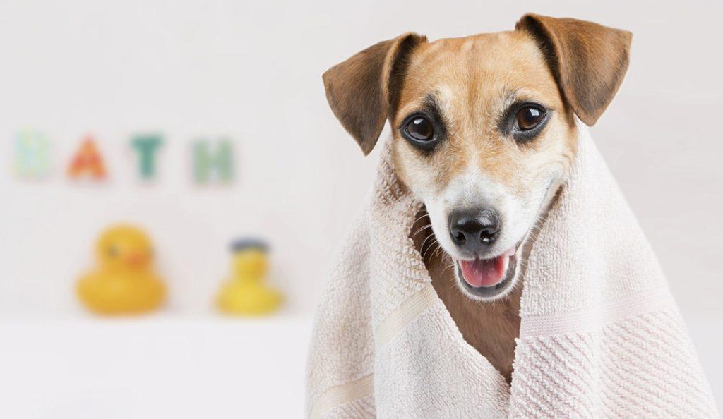 banho no cachorro 1 1024x594 - BANHO NO CACHORRO | Aprenda a FAZER sem grandes sofrimentos