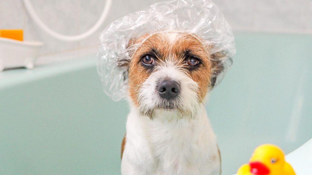 banho no cachorro 2 1024x576 - BANHO NO CACHORRO | Aprenda a FAZER sem grandes sofrimentos