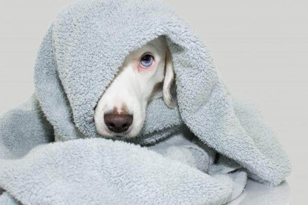 banho no cachorro 6 - BANHO NO CACHORRO | Aprenda a FAZER sem grandes sofrimentos