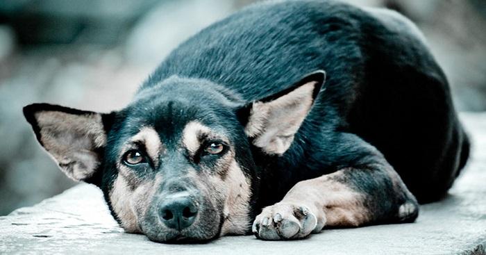 cachorro fugiu 1 - Cachorro FUGIU? Saiba o que fazer para ENCONTRÁ-LO