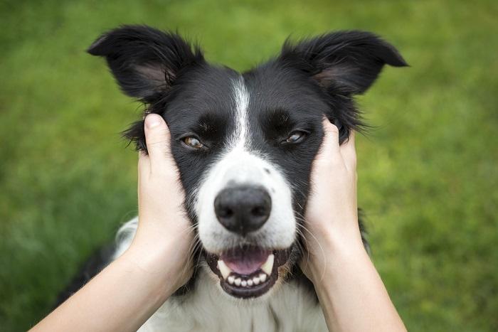 cachorro fugiu 2 - Cachorro FUGIU? Saiba o que fazer para ENCONTRÁ-LO