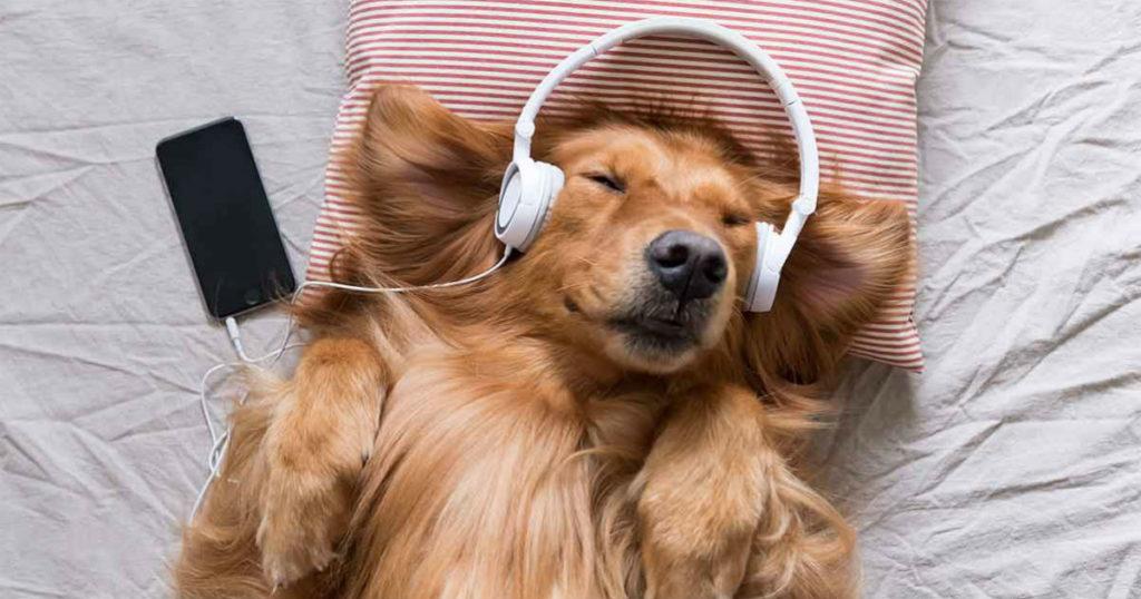 músicas para acalmar seu cachorro 1 1024x538 - MÚSICAS para ACALMAR CACHORRO |  + PLAYLISTS