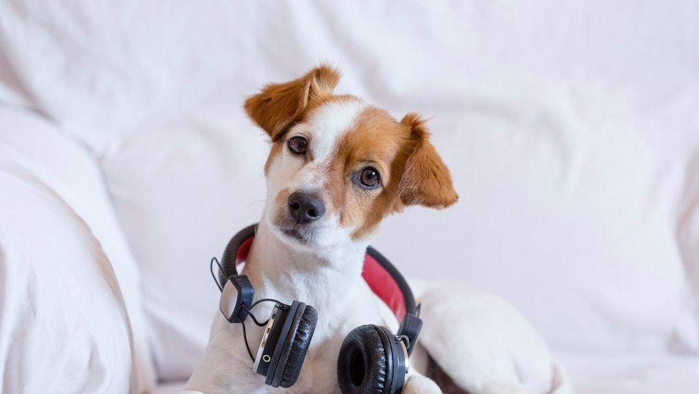 músicas para acalmar seu cachorro 2 - MÚSICAS para ACALMAR CACHORRO |  + PLAYLISTS