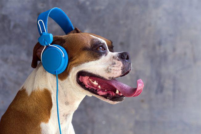 músicas para acalmar seu cachorro 3 - MÚSICAS para ACALMAR CACHORRO |  + PLAYLISTS