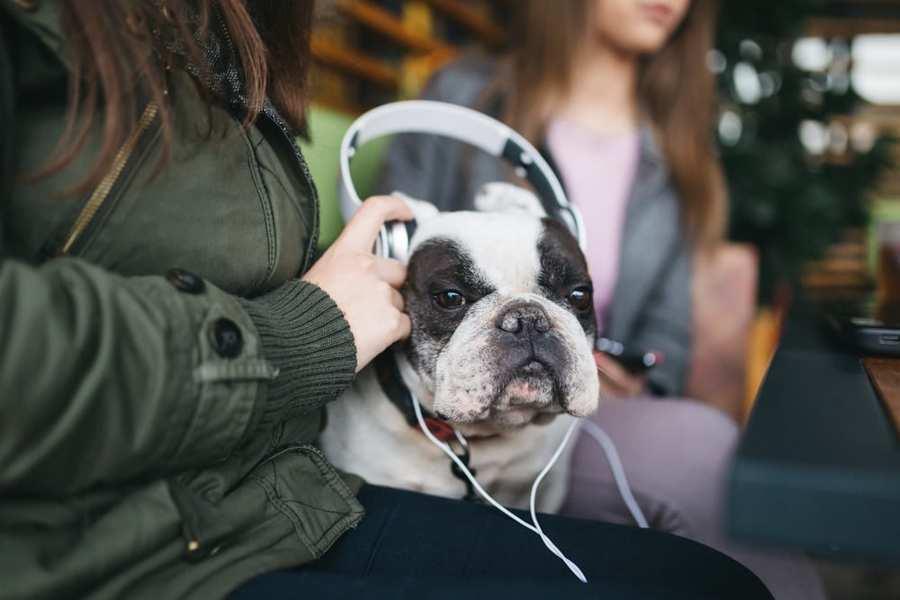 músicas para acalmar seu cachorro 4 - MÚSICAS para ACALMAR CACHORRO |  + PLAYLISTS
