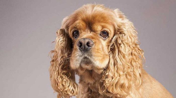 cachorros de médio porte 6 - CACHORROS DE MÉDIO PORTE   Descubra as RAÇAS Mais Procuradas