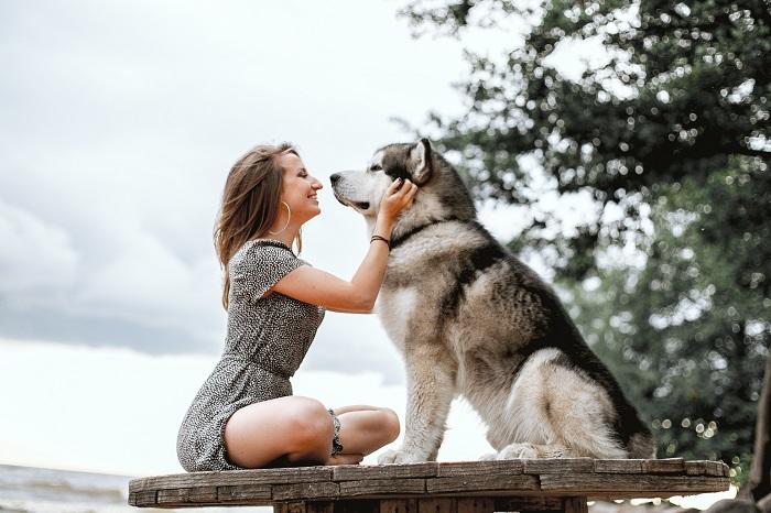 cachorro de grande porte 6 1 - CACHORROS DE GRANDE PORTE   Conheça 5 Raças