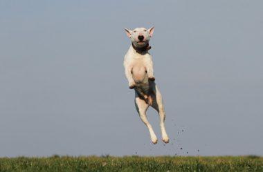 CACHORRO HIPERATIVO – Como Gastar a Energia do seu Cão