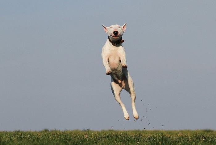 cachorro hiperativo 1 1 - CACHORRO HIPERATIVO - Como Gastar a Energia do seu Cão