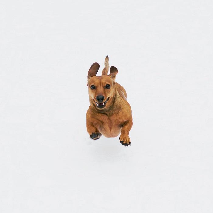 cachorro hiperativo 2 - CACHORRO HIPERATIVO - Como Gastar a Energia do seu Cão
