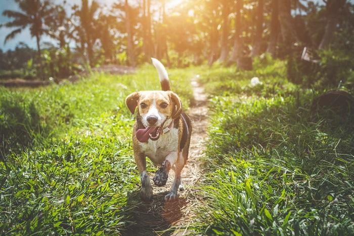 cachorro hiperativo 3 - CACHORRO HIPERATIVO - Como Gastar a Energia do seu Cão