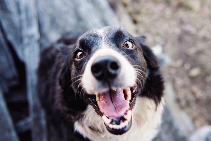cachorro hiperativo 5 - CACHORRO HIPERATIVO - Como Gastar a Energia do seu Cão