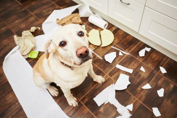 cachorro que gosta de roer 1 - CACHORRO QUE GOSTA DE ROER | Saiba Como Evitar