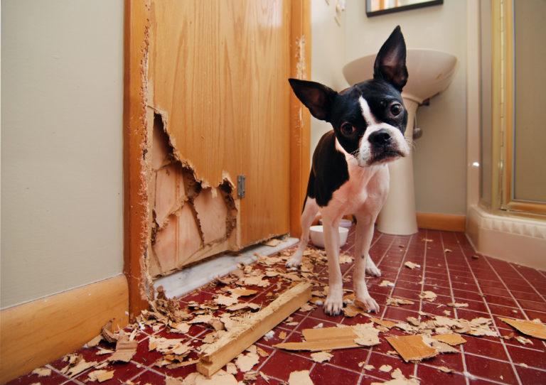 cachorro que gosta de roer 3 - CACHORRO QUE GOSTA DE ROER | Saiba Como Evitar