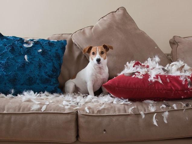 cachorro que gosta de roer 4 - CACHORRO QUE GOSTA DE ROER | Saiba Como Evitar