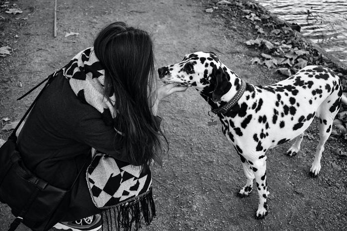cachorros de grande porte 5 1 - CACHORROS DE GRANDE PORTE   Conheça 5 Raças