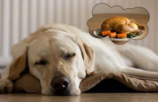 cachorros sonham 1 - CACHORROS SONHAM? Confira e Descubra Tudo