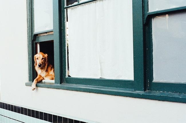 Como fazer seu cão viver mais 1 - Como Fazer Seu Cão Viver Mais - 14 DICAS Incríveis