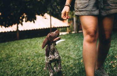 Como Fazer Seu Cão Viver Mais – 14 DICAS Incríveis