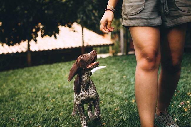 Como fazer seu cão viver mais 11 - Como Fazer Seu Cão Viver Mais - 14 DICAS Incríveis