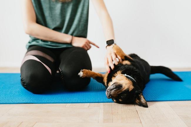 Como fazer seu cão viver mais 5 - Como Fazer Seu Cão Viver Mais - 14 DICAS Incríveis