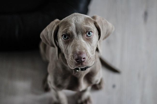 Como fazer seu cão viver mais 6 - Como Fazer Seu Cão Viver Mais - 14 DICAS Incríveis