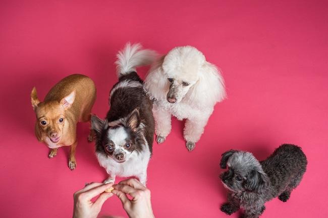 Como fazer seu cão viver mais 7 - Como Fazer Seu Cão Viver Mais - 14 DICAS Incríveis