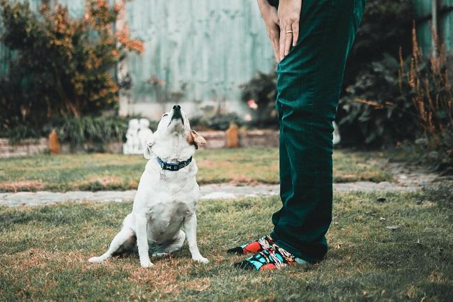 Como fazer seu cão viver mais 8 - Como Fazer Seu Cão Viver Mais - 14 DICAS Incríveis