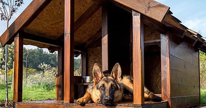 casinha de cachorro 6 - CASINHA DE CACHORRO | 4 Dicas para Construir uma