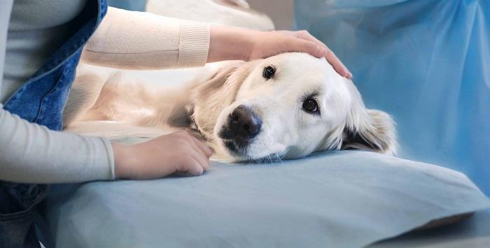 castrar cachorra 1 - CASTRAR CACHORRA - Se não fizer, Pode ser Fatal