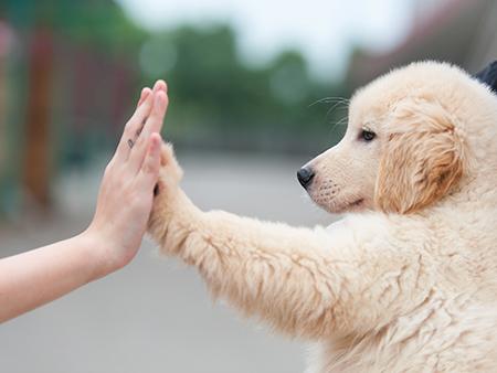 castrar cachorra 3 - CASTRAR CACHORRA - Se não fizer, Pode ser Fatal