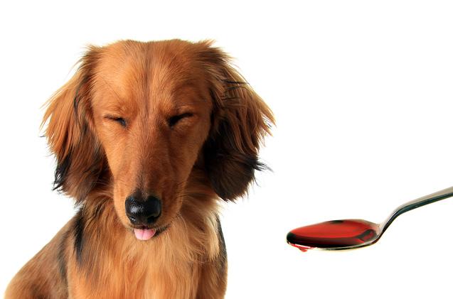 remédio para cachorro 1 - REMÉDIO PARA CACHORRO | Saiba Quais Fazem MAL
