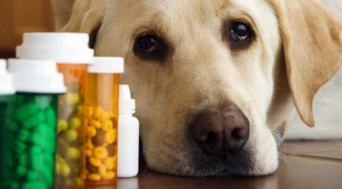 remédio para cachorro 3 - REMÉDIO PARA CACHORRO | Saiba Quais Fazem MAL