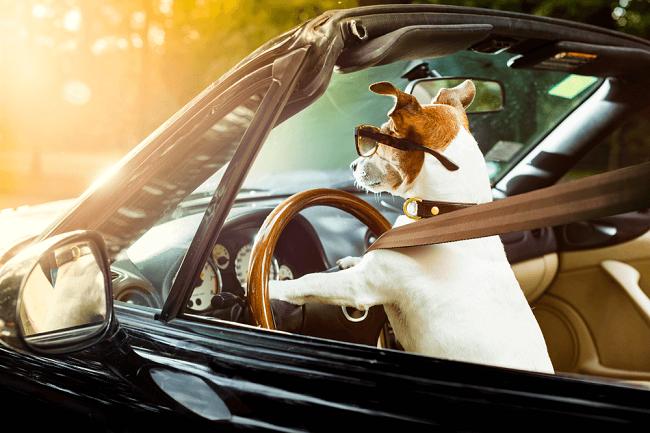 cachorro no carro 1 - CACHORRO NO CARRO | Dicas para Transportar seu Dog