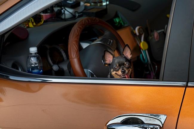 cachorro no carro 3 - CACHORRO NO CARRO | Dicas para Transportar seu Dog