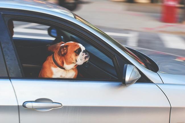 cachorro no carro 4 - CACHORRO NO CARRO | Dicas para Transportar seu Dog