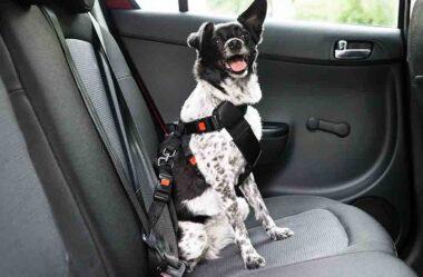CACHORRO NO CARRO | Dicas para Transportar seu Dog