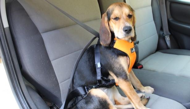 cachorro no carro 9 - CACHORRO NO CARRO | Dicas para Transportar seu Dog