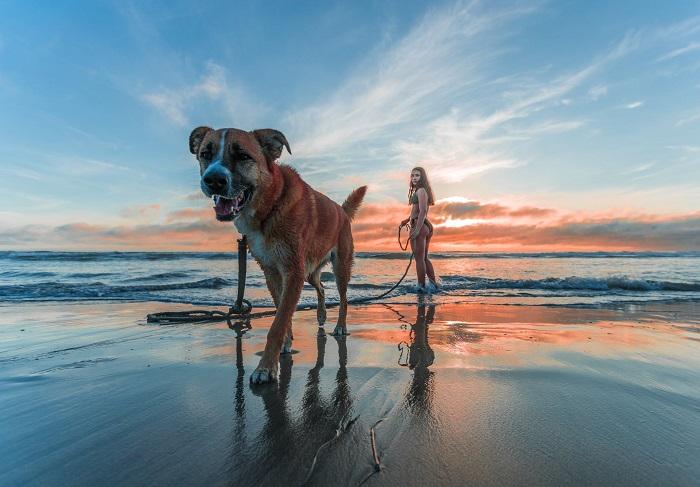passear com o cachorro 1 - PASSEAR COM O CACHORRO, Você Sabe Qual Tempo Ideal?