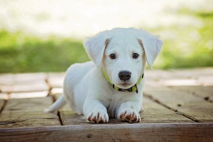 passear com o cachorro 10 - PASSEAR COM O CACHORRO, Você Sabe Qual Tempo Ideal?