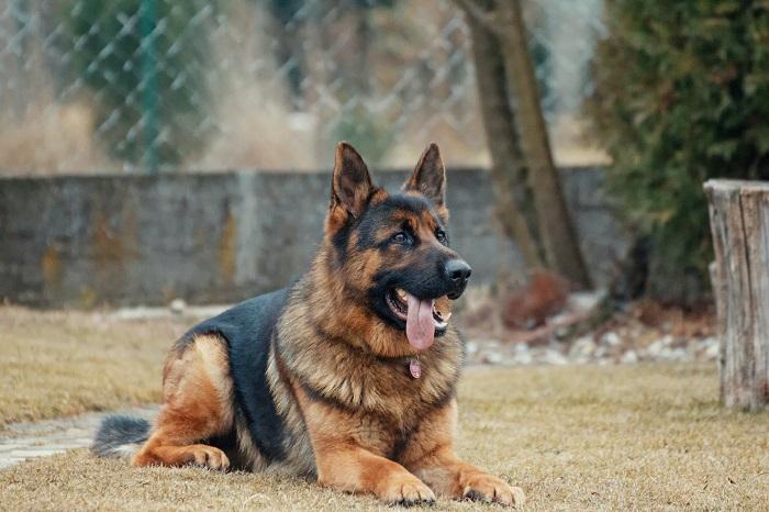 passear com o cachorro 11 - PASSEAR COM O CACHORRO, Você Sabe Qual Tempo Ideal?