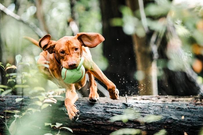 passear com o cachorro 4 1 - PASSEAR COM O CACHORRO, Você Sabe Qual Tempo Ideal?