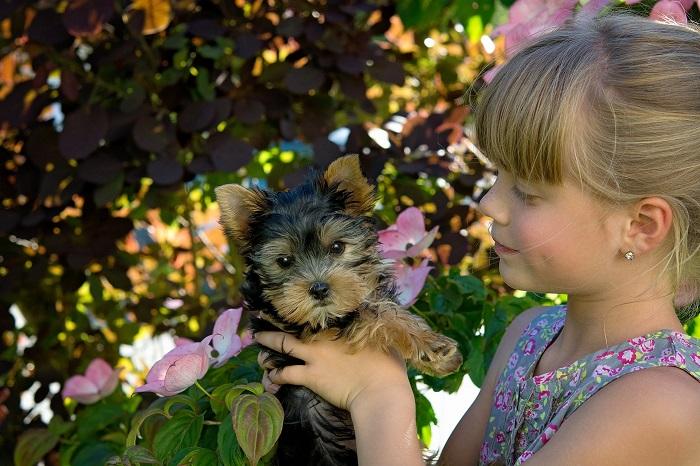 raca de cachorro para criancas 10 - CACHORRO PARA CRIANÇA: Qual a Melhor Raça pra Escolher?