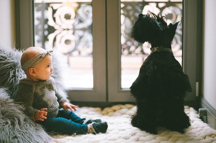 raca de cachorro para criancas 4 - CACHORRO PARA CRIANÇA: Qual a Melhor Raça pra Escolher?