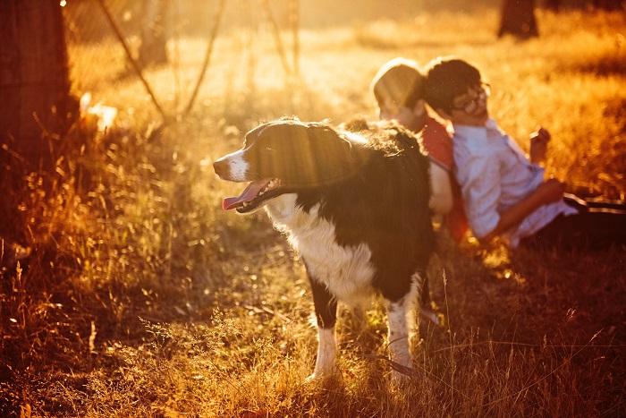 raca de cachorro para criancas 5 - CACHORRO PARA CRIANÇA: Qual a Melhor Raça pra Escolher?