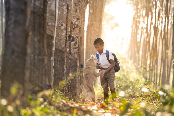 raca de cachorro para criancas 6 - CACHORRO PARA CRIANÇA: Qual a Melhor Raça pra Escolher?