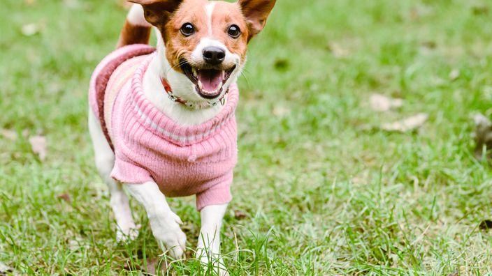 roupa para cachorro 2 - Roupa para Cachorro | É realmente necessário para seu pet?