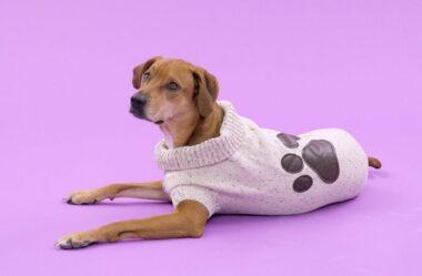Roupa para Cachorro | É realmente necessário para seu pet?