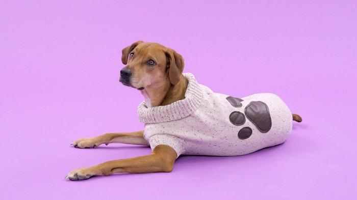 roupa para cachorro 4 - Roupa para Cachorro | É realmente necessário para seu pet?